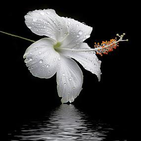 by Anshul Tiwari - Nature Up Close Flowers - 2011-2013 (  )