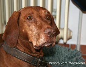 Photo: Branca vom Mertseetal Ascos mor.