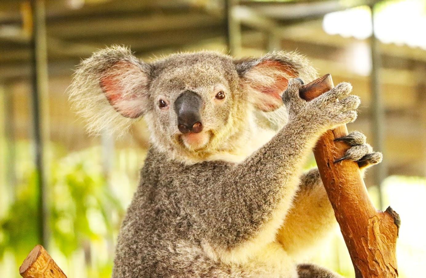 Visitar MAGNETIC ISLAND, um refúgio de cangurus e koalas | Austrália