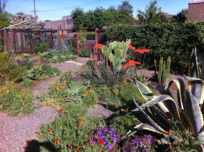 Photo: The Nugget is across the street. This is a dream for someone who loves to cook. When I move, this will be one of the things I miss the most.  The green wall there on the right side of the front gate is the passion flower vine where all the butterflies live. The cactus is a spineless variety cultivated by Luther Burbank.
