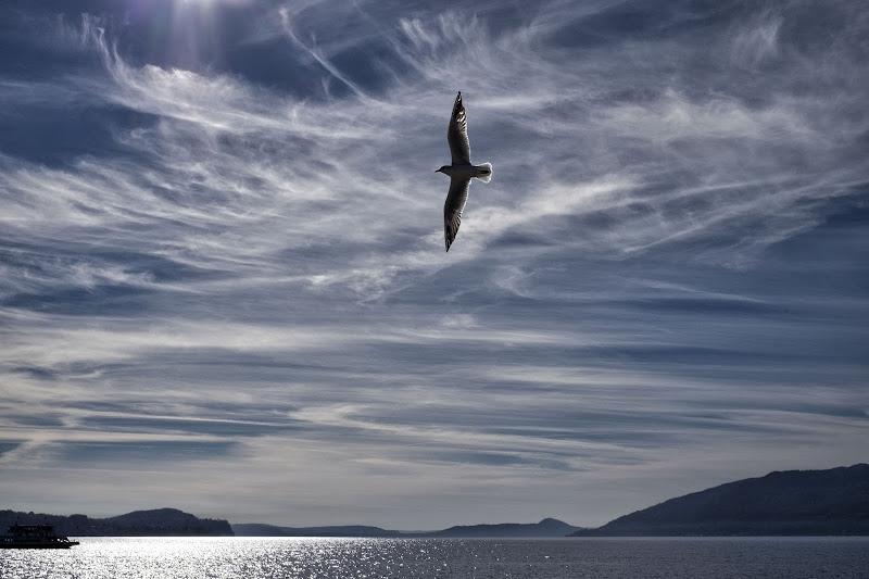 La libertà ha le ali spiegate di Tiziana Detoni