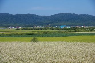 Photo: 北竜町の彩どり・8月の4