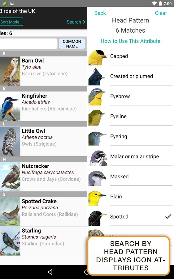 iBird UK Lite Free Bird Guide- screenshot