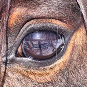 by Stacy Swenson - Animals Horses