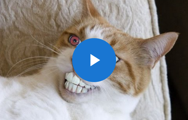 funny cat videos   android apps on google play