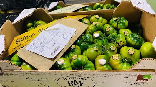 Vegacañada bate el récord en cuanto a cotizaciones del tomate Raf en junio