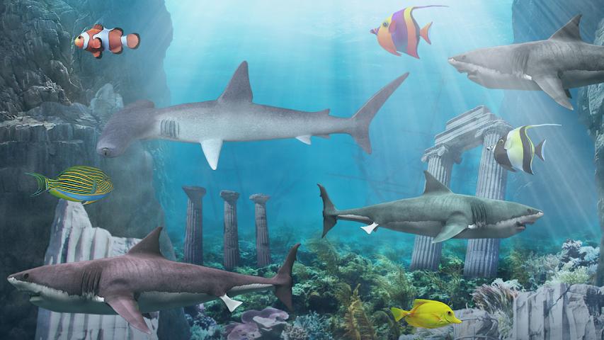 shark aquarium live wallpaper - photo #10