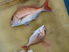 Photo: 幸先良く、真鯛!しかもダブル!