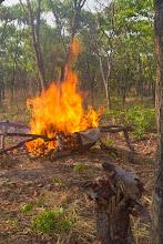 Photo: Setting the poacher's camp on fire Queimando o acampamento dos furtivos