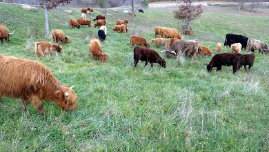 Photo: Some nice mid-Fall lush forage for the herd...
