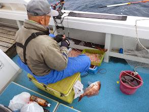 Photo: ミスなしで毎回、真鯛を上げています。