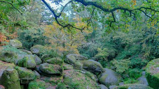 Forêt d'Huelgouat