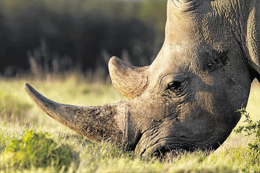There were 259 fewer rhinos killed in 2018 than in the year before and there are 318 rhino poaching cases on the court roll, involving 645 accused and 897 charges, says the department of environmental affairs.