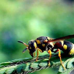 Sleeping Bee by Adnan Hidayat Prihastomo - Instagram & Mobile Other ( macro, bee, insect )