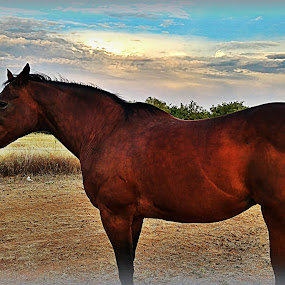 Sugar by Sherry Dennis - Animals Horses