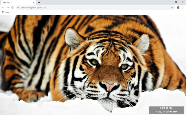 Tiger New Tab & Wallpapers Collection