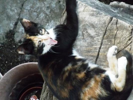 Vita da gatti di Polly89