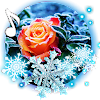 Roses Snow Winter Live wallpaper