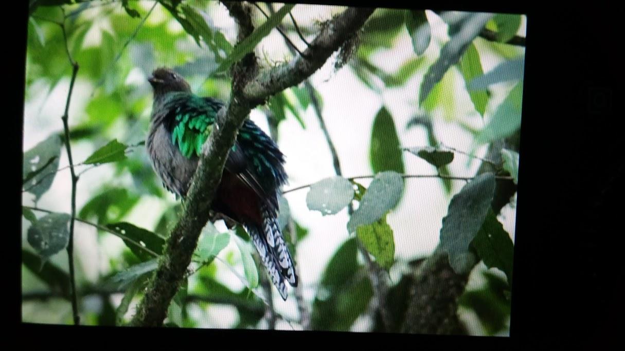 quetzal mañana