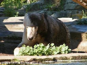 Photo: Knut praesentiert sein aktuelles Make Up ;-)