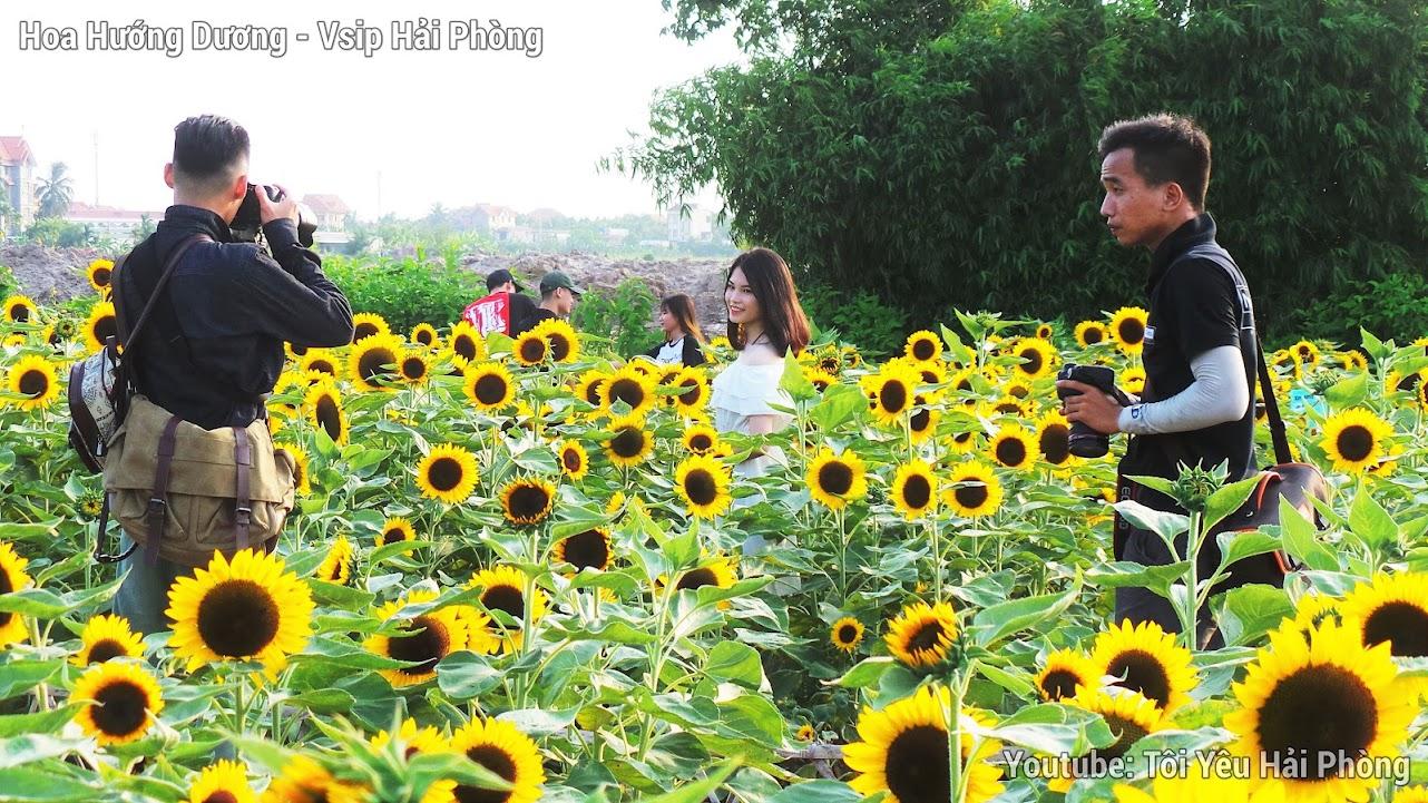 Vườn hoa Hướng Dương - Central Park Vsip Hải Phòng 5