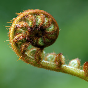 Spiral of Nature by Tanya Rossi - Nature Up Close Flowers - 2011-2013 ( plant, fern, nature, spiral )