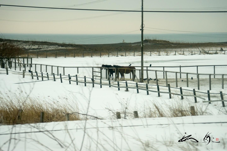 雪が残る牧場。。。