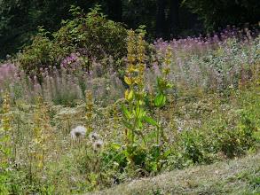 Photo: dernières floralies estivales