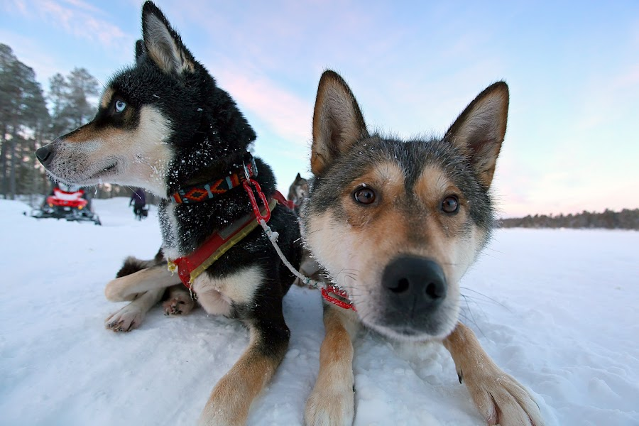 by Sirinat Simon - Animals - Dogs Portraits