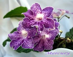 Photo: Mercury