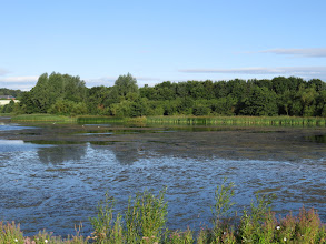 Photo: 12 Aug 13 Priorslee Lake: Extensive areas of weed are still present on the lake. (Ed Wilson)