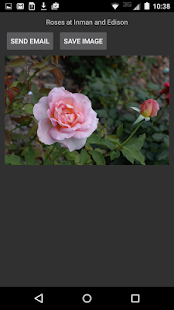 Hyde Park Flowers- screenshot thumbnail