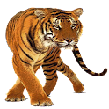 Tiger Widget/Stickers icon