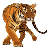 Tiger Widget/Stickers