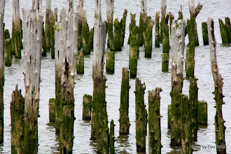 Photo: (Year 2) Day 346 - Weed and Pilings