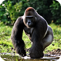 Gorilla Pack 3 Live Wallpaper icon