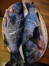 Photo: two fresh whole cods