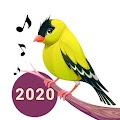 Bird Calls, Sounds & Ringtones APK