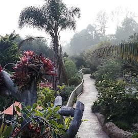 Garden Path 1 by Gail Marsella - Nature Up Close Gardens & Produce ( tree, green, san diego botanical garden, path, flower )