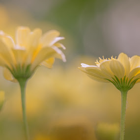 by Mario Guay - Flowers Flower Gardens