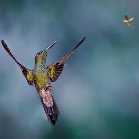 Fight by Gorazd Golob - Animals Birds