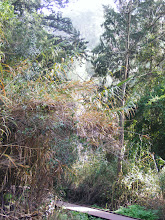 Photo: Тропинка в лесу