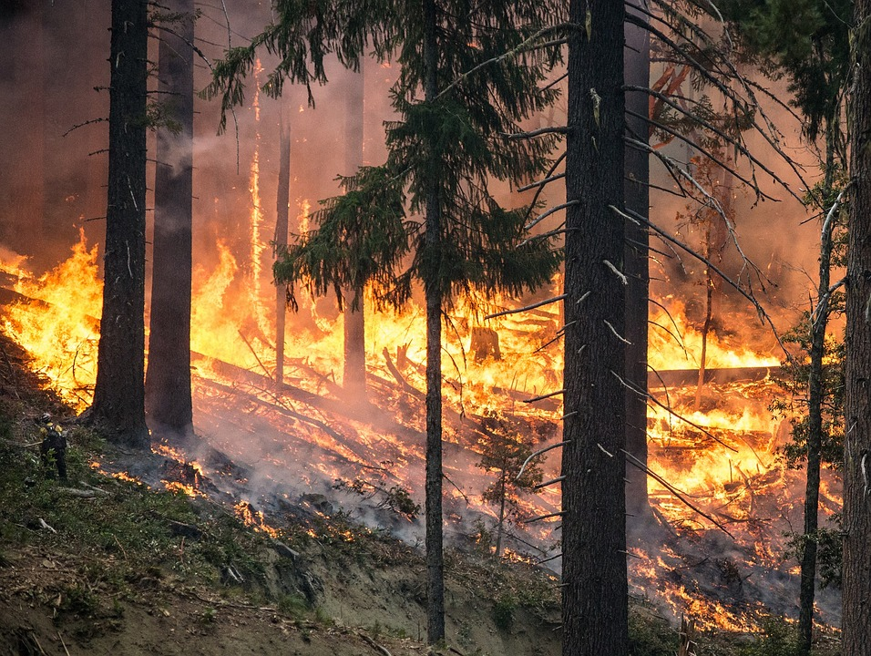 ¡Bolsonaro finalmente pretende tomar acción! Incendios en el Amazonas