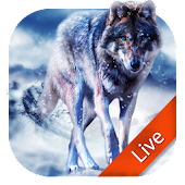 Ice Wolf Live Wallpaper 3D
