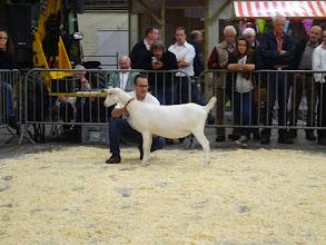 Photo: Rubriek 4: witte lammeren geboren 2/2 en 13/2 2015.  1a. Vanja van de Dijk.