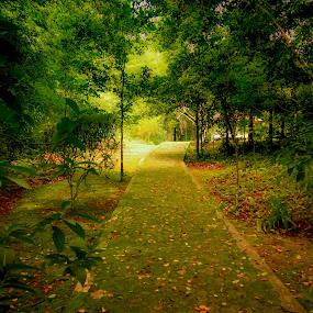 Footpath by David Loarid - Nature Up Close Leaves & Grasses