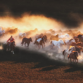 Catching Up by Paulus Widjanarko - Animals Horses ( #dusty, #innermongolia, #dust, #herder, #horses, #horseherder, #herd, #livestock, #afternoon )