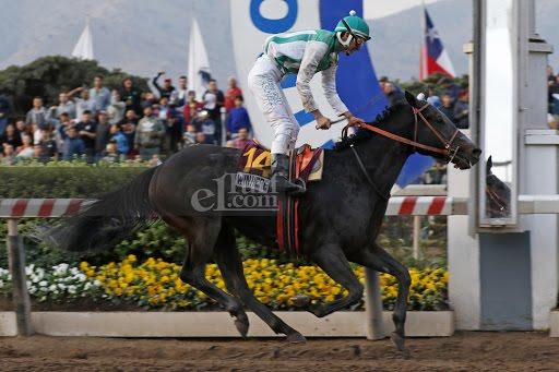 Win Here (Breathless Storm) se quedó con la victoria en el Clásico Gran Premio Hipodromo Chile (G1-2200m-Arena-HCH). - Staff ElTurf.com