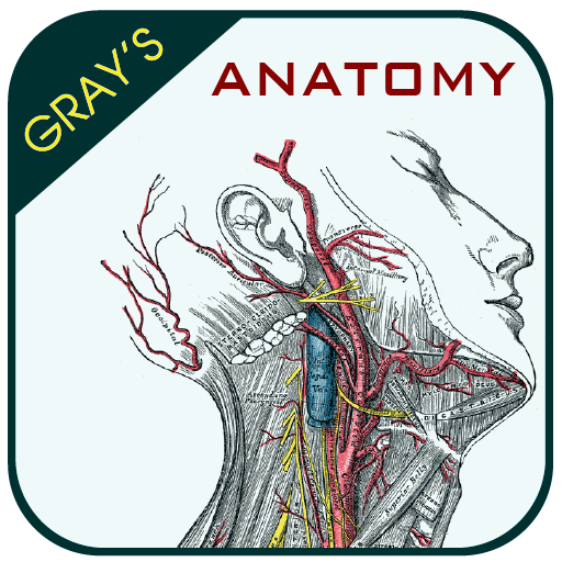 Grays Anatomy Atlas Apps On Google Play