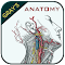 Gray's Anatomy file APK for Gaming PC/PS3/PS4 Smart TV